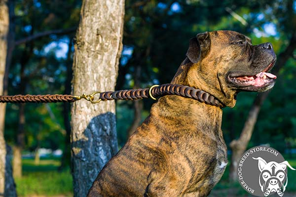 Braided design leather Boxer collar