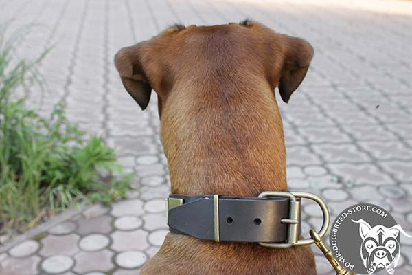 Leather Boxer collar with brass fittings