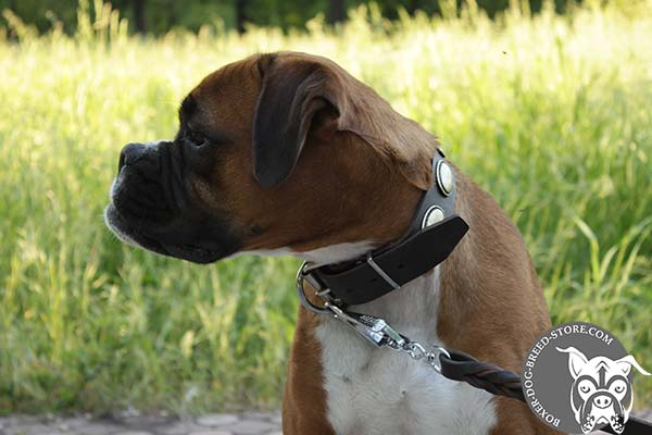 Superior leather Boxer collar with decorations