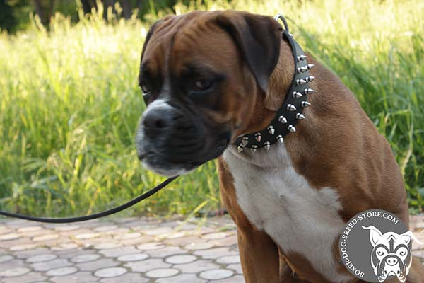Boxer collar of dog friendly materials