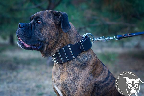 Excellent quality Boxer collar
