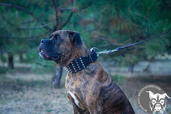 Super wide leather Boxer collar