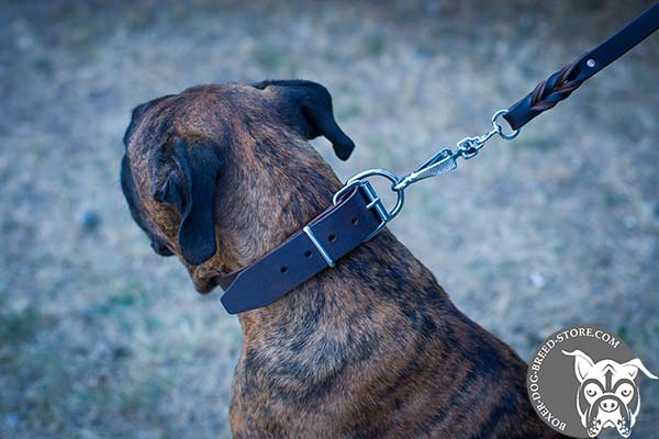 Classic Boxer collar with nickel plated hardware