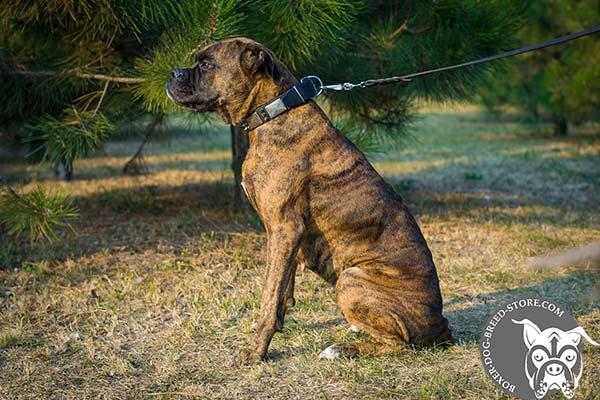 Durable Boxer collar