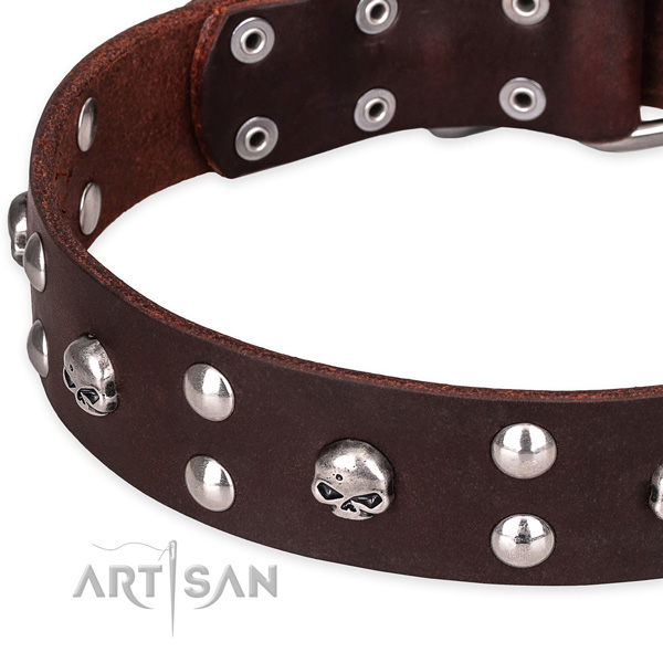Daily leather dog collar with stunning studs