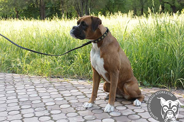 Luxury leather Boxer collar