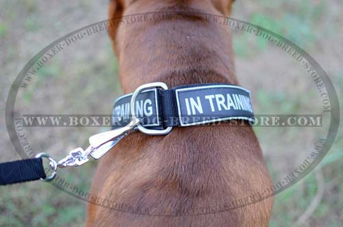 Perfect nylon collar to control your Boxer
