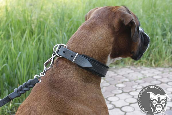Soft padded leather collar for Boxer