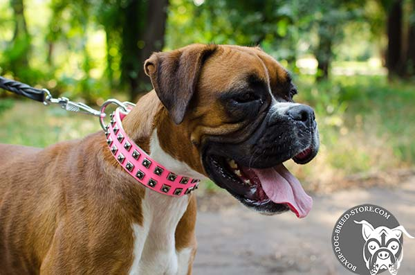 Superior pink Boxer collar of exclusive design