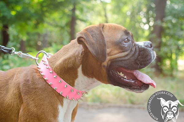 Designer pink Boxer collar with two rows of spikes