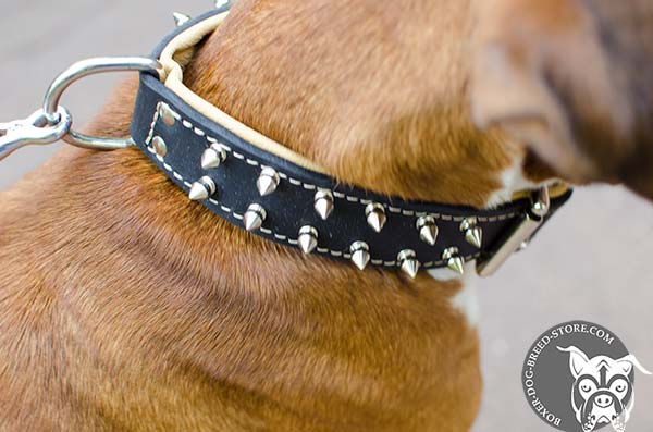Spiked leather padded collar for Boxer