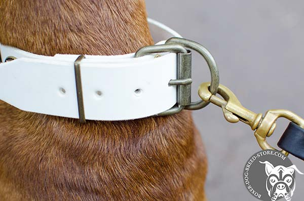 Dependable fittings on white Boxer collar