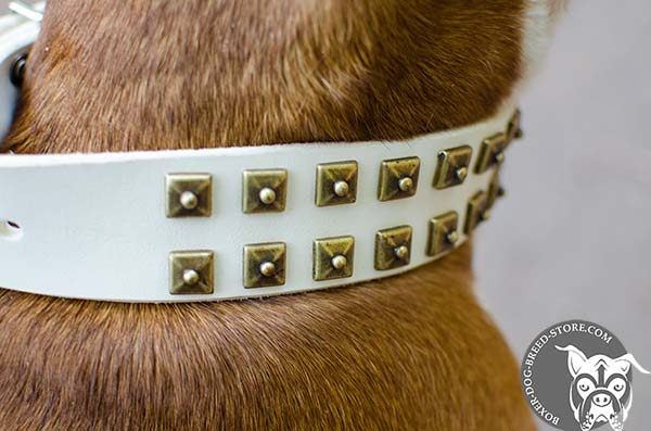White Boxer collar with brass decorations