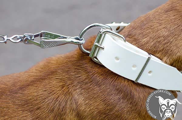 White leather Boxer collar with reliable hardware
