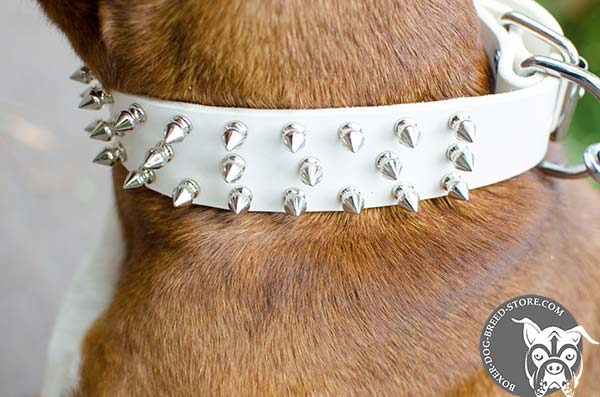 White leather Boxer collar with spikes