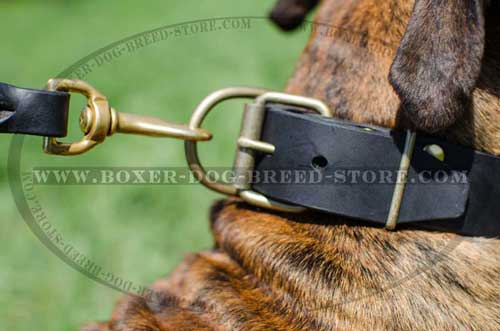 Strong brass hardware for leather Boxer collar