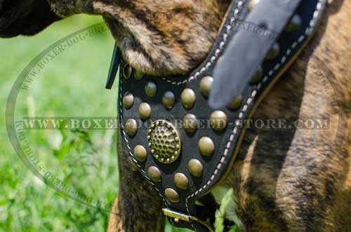 Suberb quality leather harness