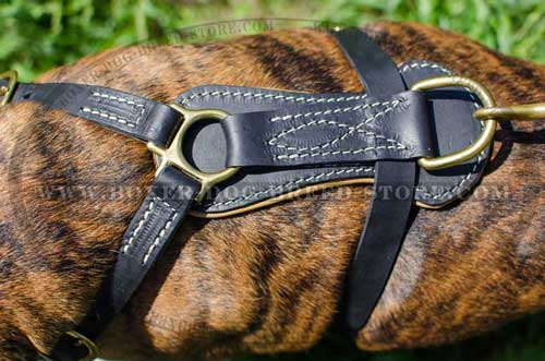 Royal leather Boxer harness
