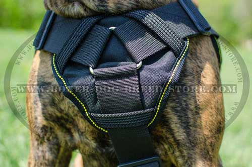 Incrideble nylon harness