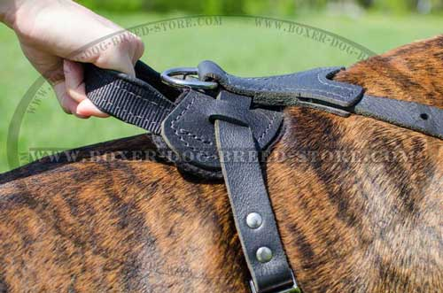 Custom made leather harness for your Boxer