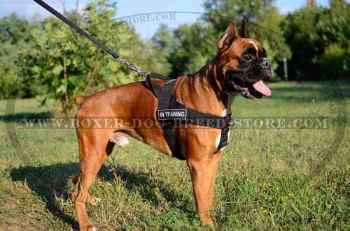 Practical and reliable harness for Boxer