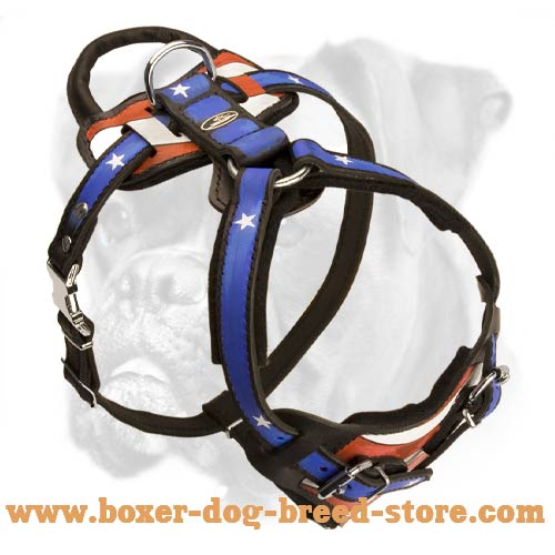 Soft padded leather harness for exra comfort of your Boxer
