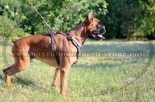 100% full grain leather harness