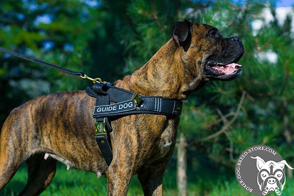Boxer assistant harness with removable ID patches