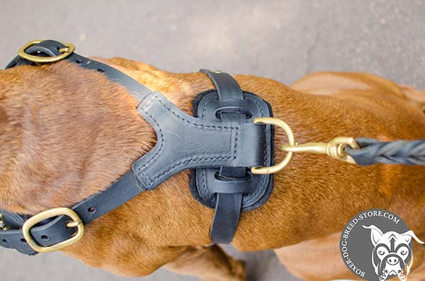Leather Boxer harness with padded back plate