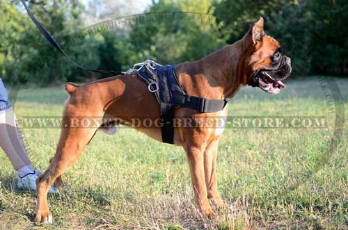 Any weather Boxer harness