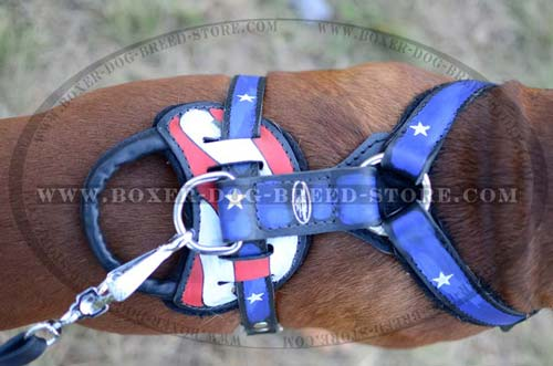 Handpainted leather Boxer harness with strong handle and D-ring