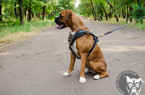 Easy adjustable leather Boxer harness