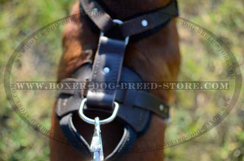 Nickel plated D-ring and secure rivets for Boxer harness