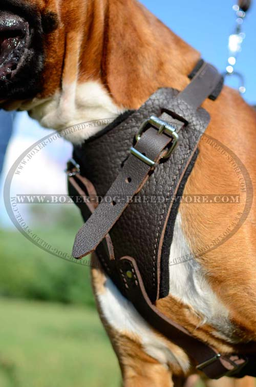 Agitation leather Boxer harness with wide soft padded chest plate