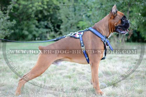 Walking and training harness