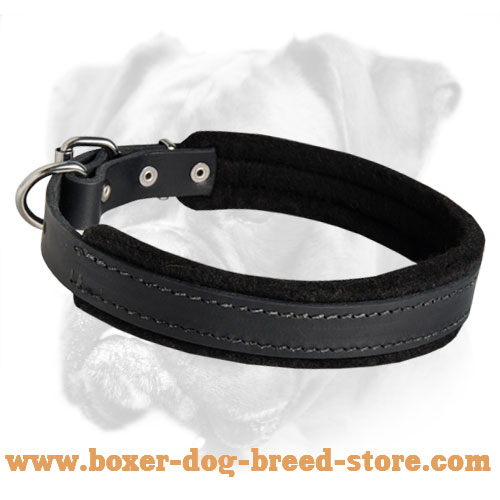 Leather Collar with Thick Soft Padding for Boxer