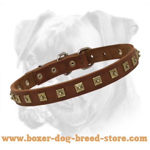 Boxer Leather Collar with Square Studs