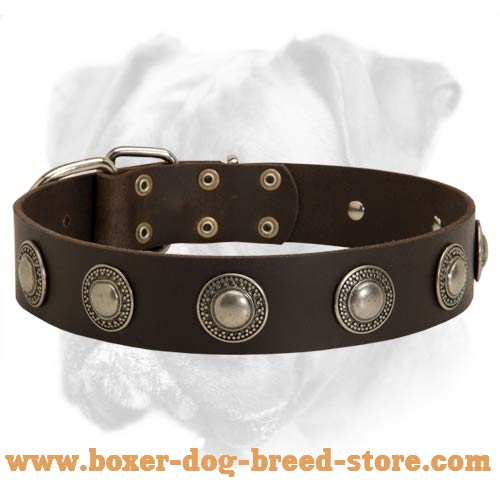 Gorgeous Leather Boxer Collar with Silver Conchos