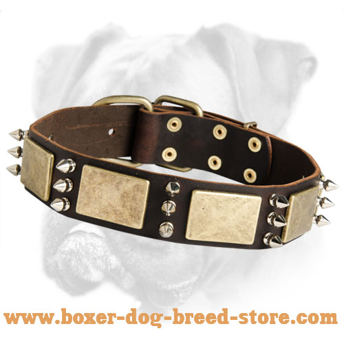 Premium Quality Leather Boxer Collar with Brass Plates and Nickel Spikes