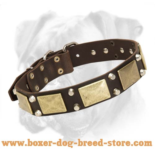 Leather Boxer Collar with Brass Plates and Nickel Pyramids