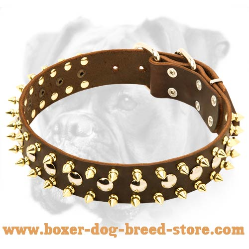 High Quality Leather Boxer Collar with Brass Spikes and Nickel Studs
