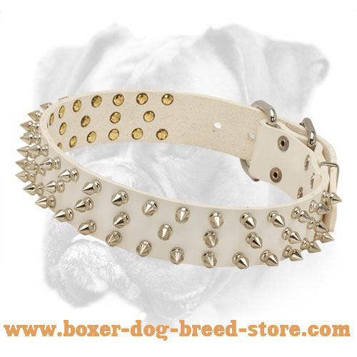 Incredible White Leather Boxer Collar with Nickel Spikes