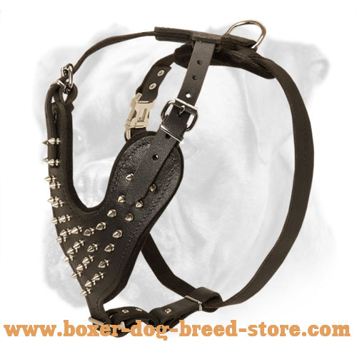 Stylish Walking Leather Harness with Decorative Spikes for Active Boxer