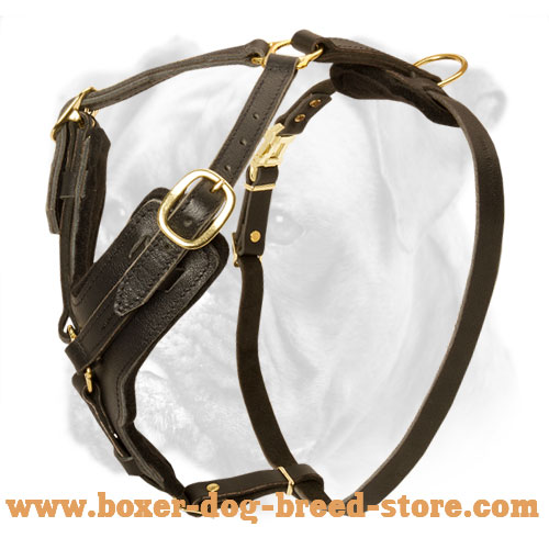Every Day Elegant and Comfortable Leather Harness for Boxer Made of Safe Materials - Click Image to Close