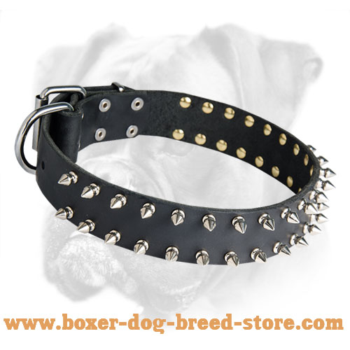 Fabulous Boxer Leather Spiked Collar for Daily Walks and Training