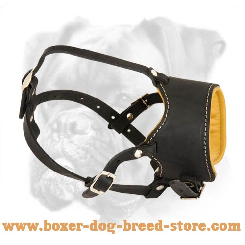 Classic Nappa Padded Leather Muzzle for Boxer