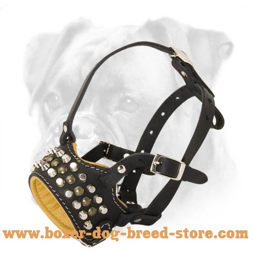 Exclusive Nappa Padded Leather Muzzle with Studs and Pyramids for Boxer