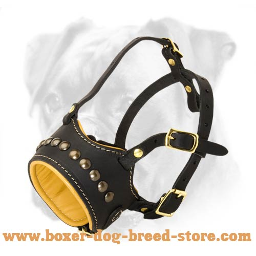 Studded Leather Muzzle with Soft Nappa Padding for Boxer Breed