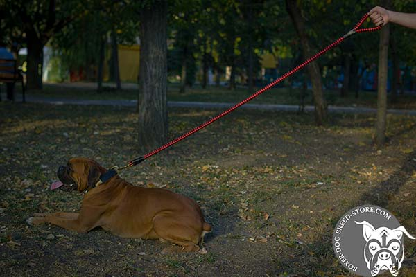 Boxer nylon leash of high quality with brass plated hardware for daily walks