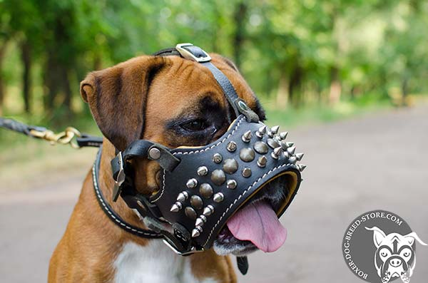 Leather Boxer muzzle allows drinking water